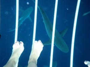 Shark Attack 010